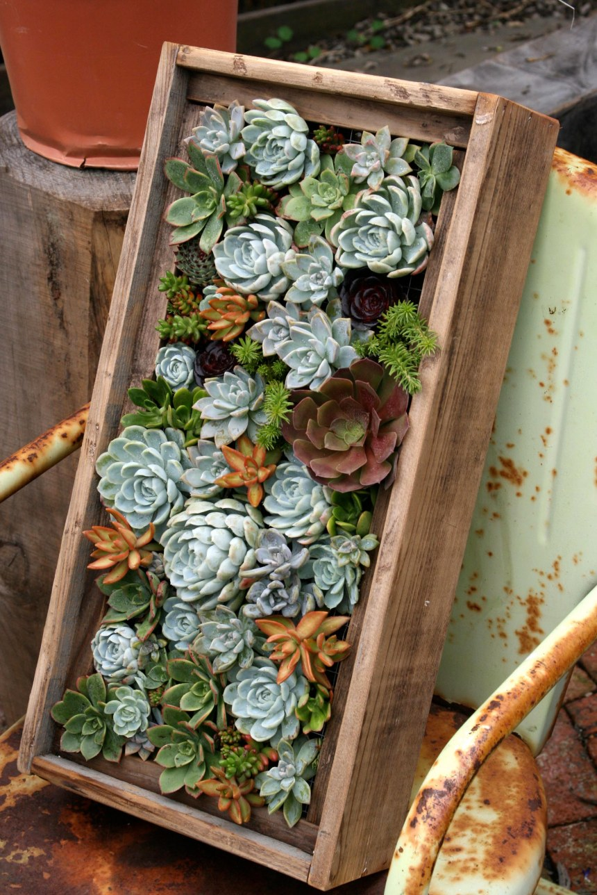 Succulent box GROW
